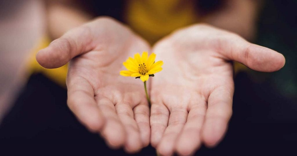 Two open hands holding a yellow flower.